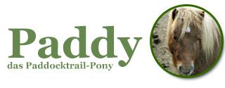 Paddy - das Paddocktrail-Pony