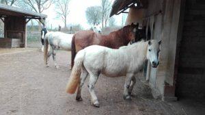 anweiden pferd zeitplan