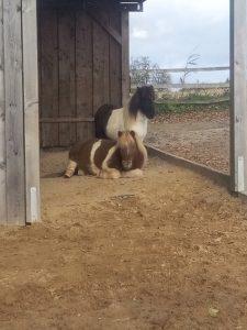 pferd guckt aus pferdestall stoff